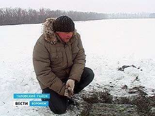 Воронежские озимые аномальные холода перенесли спокойно