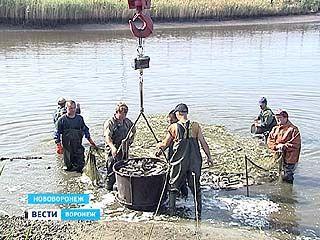 Воронежские предприятия пополнили водоемы новыми жителями