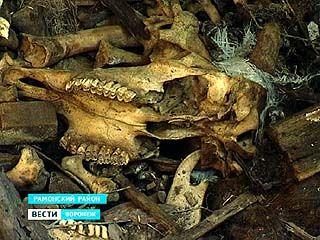 Воронежские скотомогильники или 326 скрытых угроз