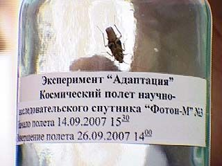 Воронежские тараканы провели на орбите 12 дней