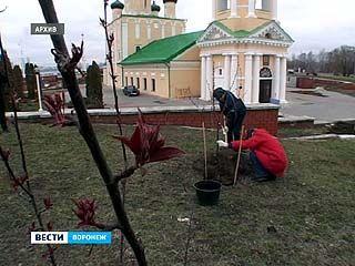Воронежские власти предлагают наказать тех, кто уклонился от субботника