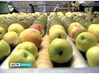 Воронежские яблоки разъехались на прилавки российских магазинов