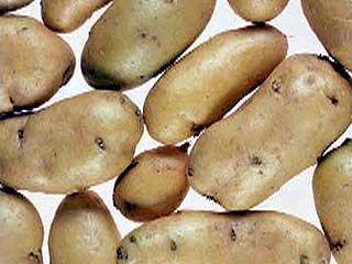 Воронежских детей кормили картофелем с нитратами