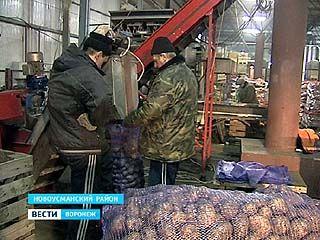 Воронежским сельхозпроизводителям предстоит выдержать конкуренцию иностранной продукции