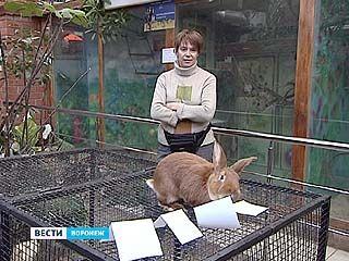 """Воронежский кролик Рыжик с ролью """"сурка"""" не справился"""