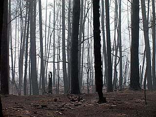 Воронежский лес на несколько километров превратился в сплошное пепелище