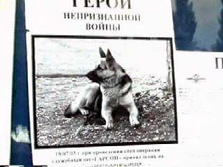 Воронежский пес помог обезвредить боевика Рамзана Абасова