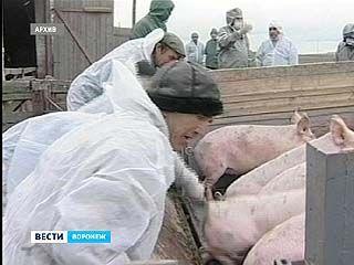 Воронежский Россельхозназдор настаивает на временном прекращении контактов с Краснодарским краем
