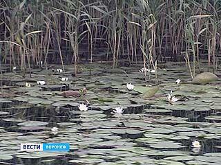Воронежское море зацвело