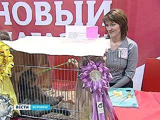Воронежскому фелинологическому центру исполнилось 20 лет
