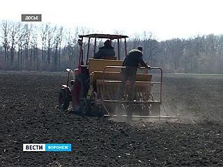 Воронежскому региону направили более двух миллиардов на поддержку сельского хозяйства
