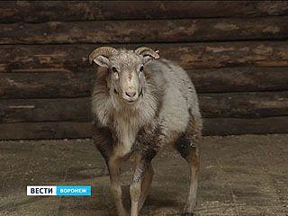 Воронежскому зоопарку исполняется 20 лет