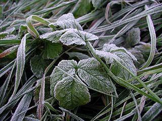 Воронежской области грозят заморозки