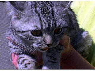 Воронежцам предложили выбрать живой прототип кота Василия