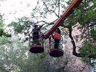 Воронежцев спасают от деревьев