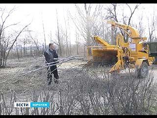 Воронежцы стали активнее принимать участие в месячнике благоустройства