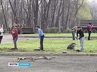 Воронежцы внесли свой вклад в благоустройство города