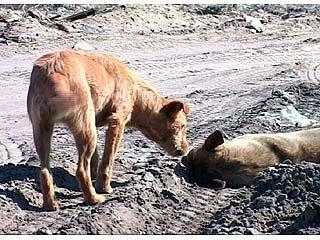 Воронежцы встали на защиту бездомных животных