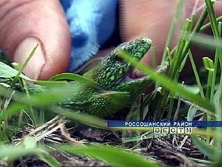 Ворошилово - один из самых густо населённых змеями уголок области