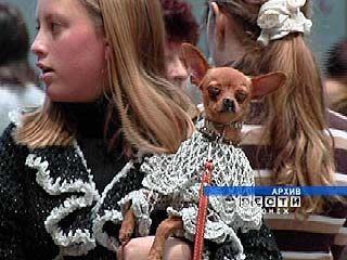 Всероссийская выставка собак прошла в Воронеже