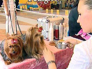 Всероссийская выставка собак пройдет в Воронеже