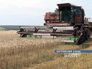 Вслед за уборкой зерновых начинается свекловичная страда