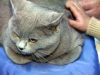 Выставка кошек прошла в столице Черноземья