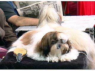 """Выставка собак """"Тихий Дон 2007"""" собрала около 300 участников"""