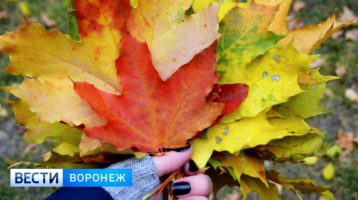 Метеорологи рассказали о погоде в октябре в Воронежской  области