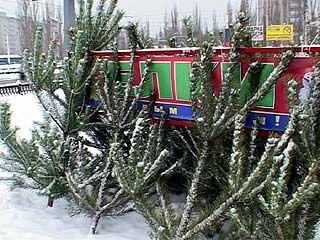 WWF призвал воронежцев не покупать незаконно вырубленные елки