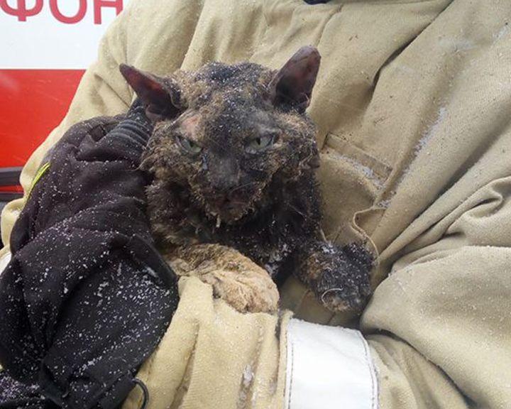 ФОТО: Воронежские пожарные спасли кошку при разборе завалов на месте ночного взрыва в сауне