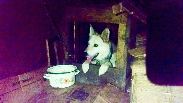 Активисты нашли хозяина собаки, оказавшейся запертой в жарком сарае