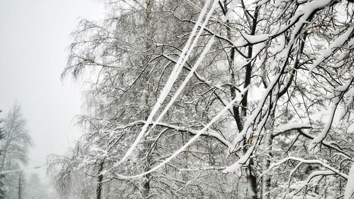 В Воронежской области из-за снегопада без света частично остались 38 сёл