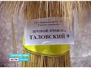 """Ячмень """"Таловский-9"""" - признан одним из самых лучших"""