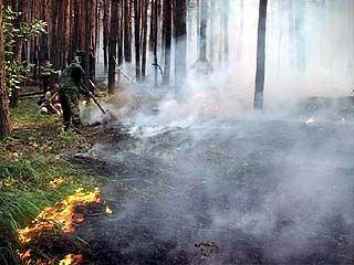 За минувшие сутки площадь лесных пожаров в области сократилась на четверть