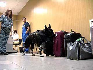 Зачем служебным собакам Воронежской таможни нужны сапоги?