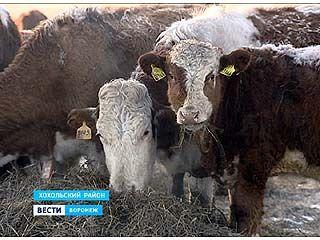 Задача максимум: обеспечить регион мясом собственного производства