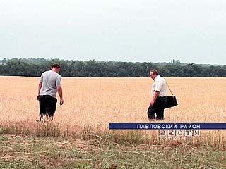 Засуха пришла в Павловский район
