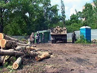 Зеленые насаждения Воронежа под угрозой уничтожения