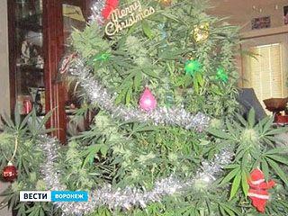 Житель Бутурлиновки вырастил новогоднее дерево из конопли, но праздник встретить не успел