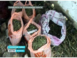 Житель Таловского района хранил наркотики в клетках для кроликов