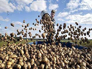 Жителей посёлка Зеленый Гай обеспечили картошкой