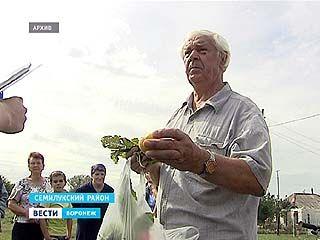 Жители Чудовки не получат компенсации за испорченный урожай