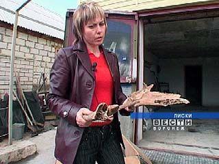 Жители Лисок во дворе собственного дома обнаружили останки динозавра