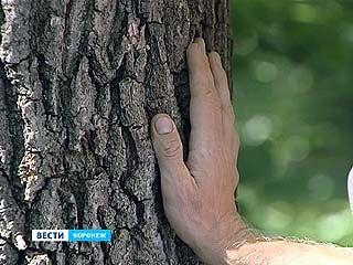 Жители микрорайона намерены спасти Дубравы от полного исчезновения