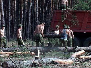 Жители пригорода начинают вырубать деревья вдоль своих домов