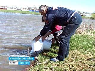 """Жители села Лещаное Воробьёвского района решили зарыбить """"Большой школьный"""" пруд"""