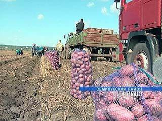 Жители Воронежской области не останутся без картофеля