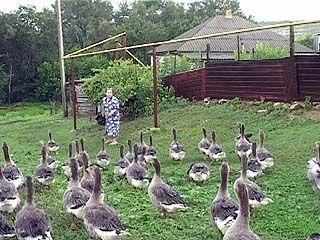 Жители Воронежской области переходят на альтернативное животноводство