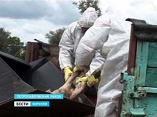 Жители Воронежской области выбрасывают трупы погибших животных в овраги